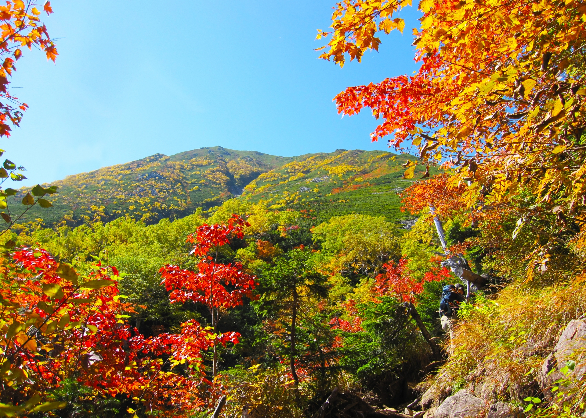 いろいろな秋